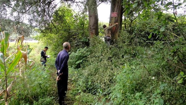 向群众介绍保护古大珍稀树种的重要意义