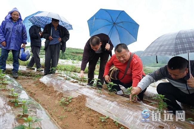 镇远:强化技术培训稳步推进辣椒产业发展