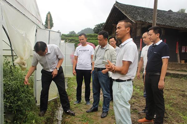 县委书记刘建新率队到江古镇调研扶贫产业